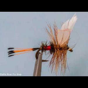 Picture of Coachman Fly