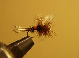 A Royal Coachman Fly